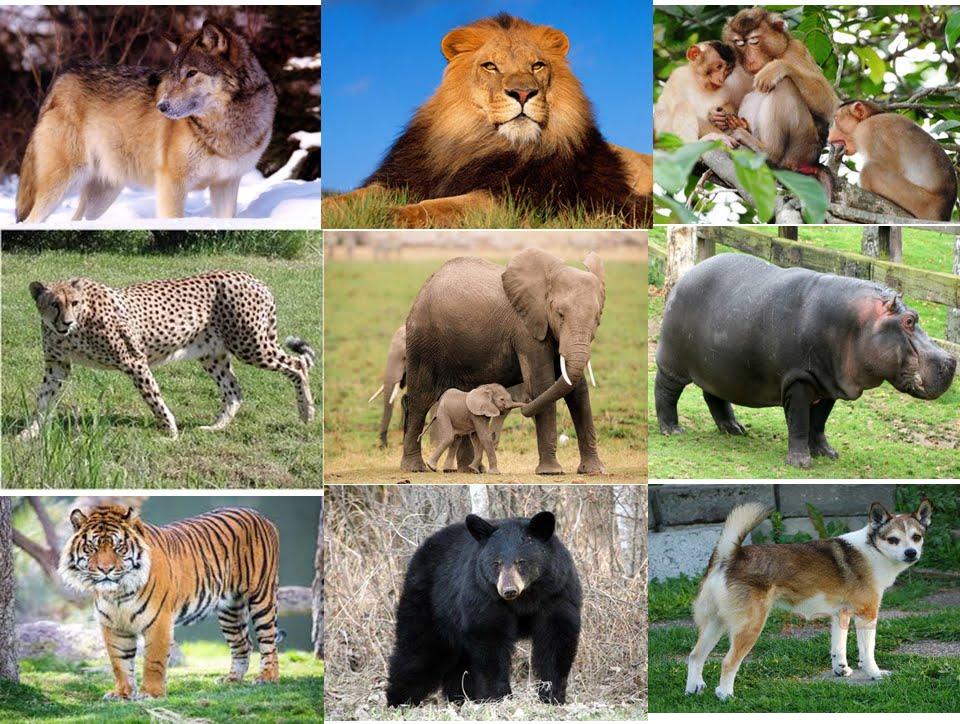 từ vựng tiếng trung chủ đề động vật